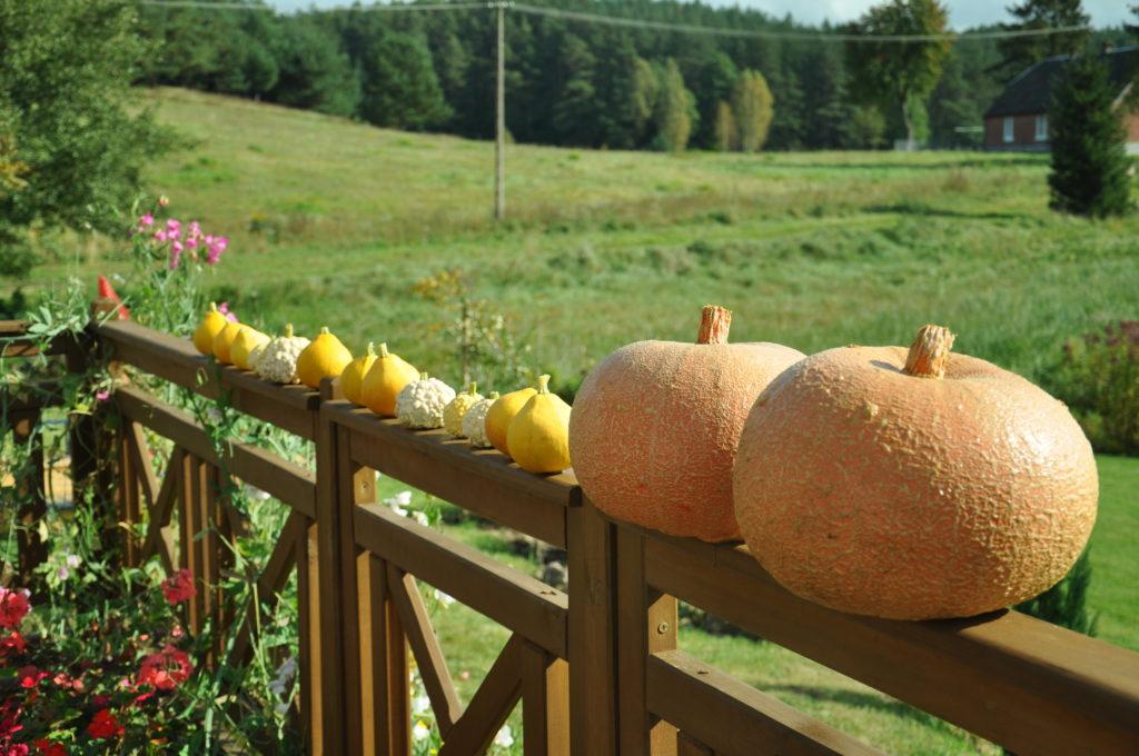 Ozdoby wczesnej jesieni