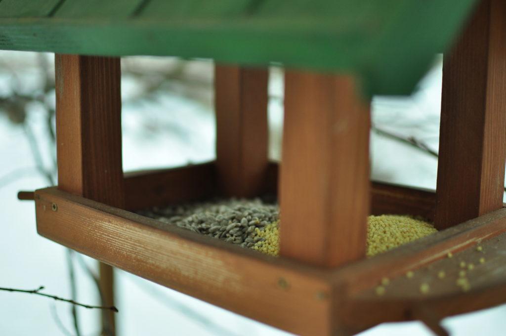 Słonecznik i kasza jaglana dla ptaków