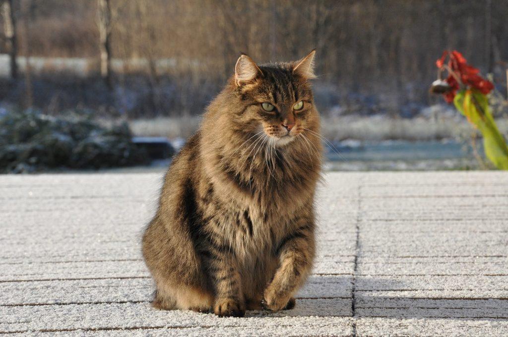 Łowny kot