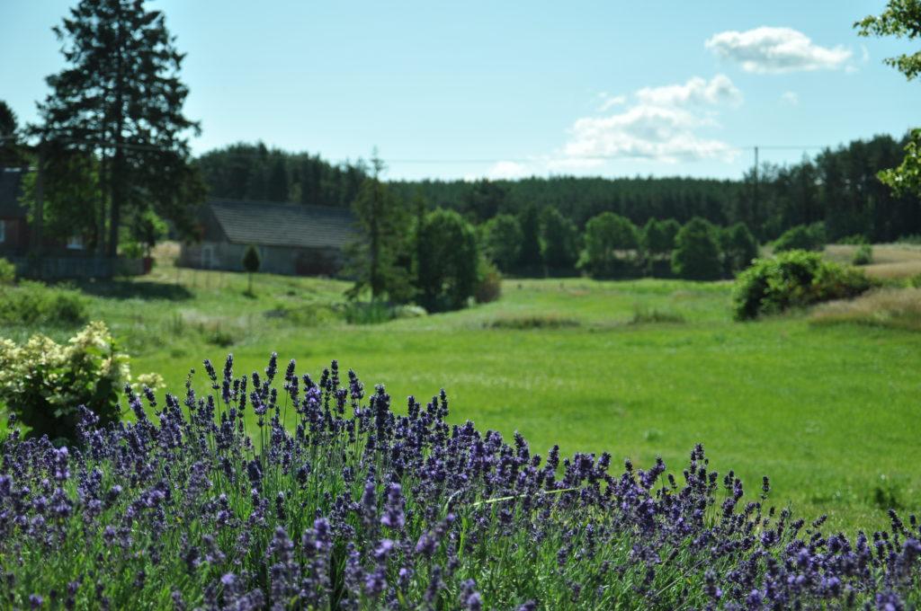 Widok z naszego ogrodu