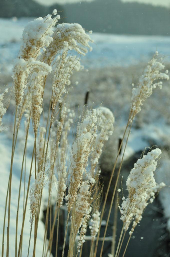 Zimowe piuropusze.