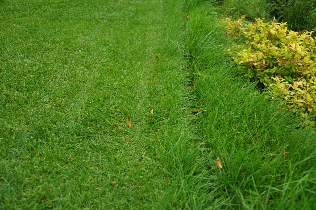 Krawędź trawnika koszonego przez robota