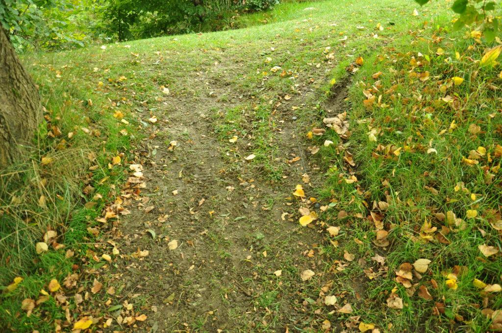 Trawnik uszkodzony przez robota koszącego.