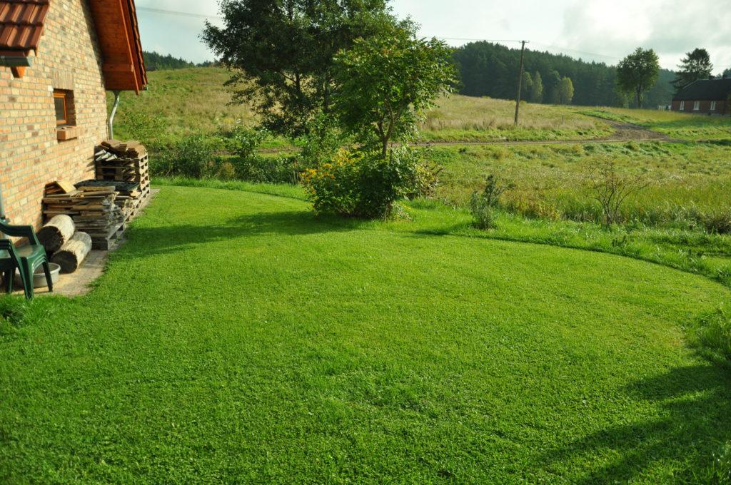 Część trawnika przeznaczona do likwidacji