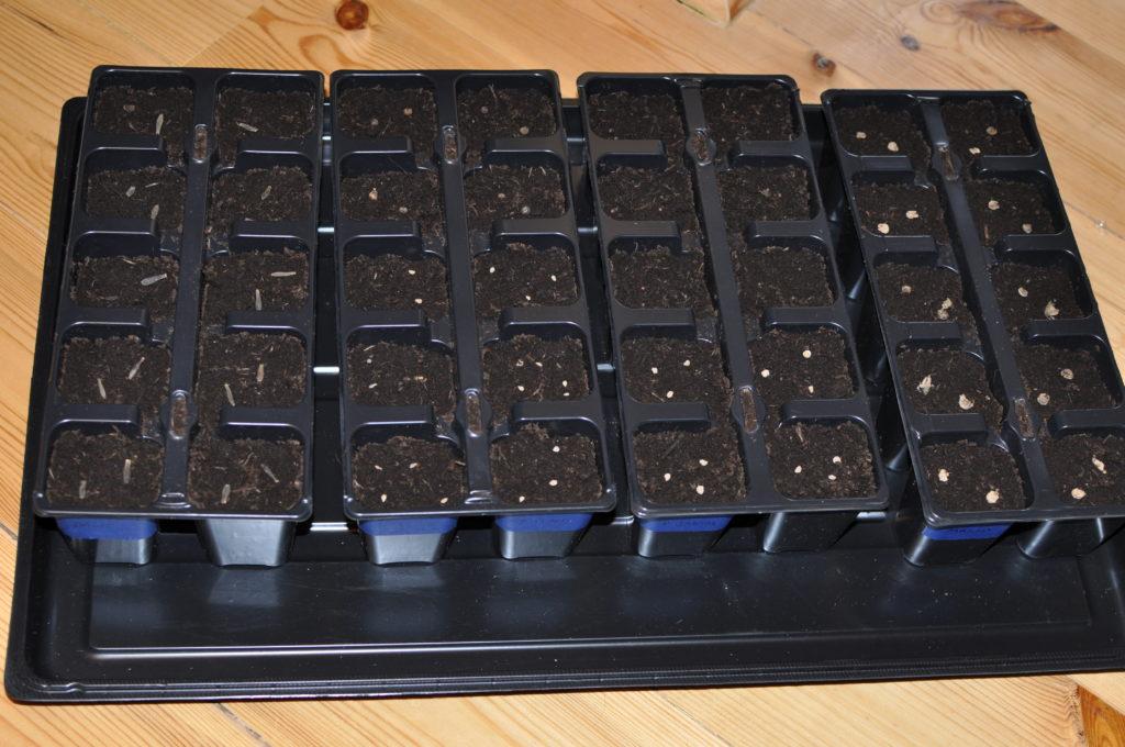 Nasiona wysiane do wielodoniczki