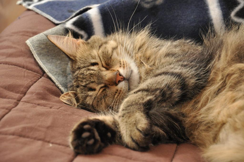 Kot - pierwszy mieszkaniec Sielanki