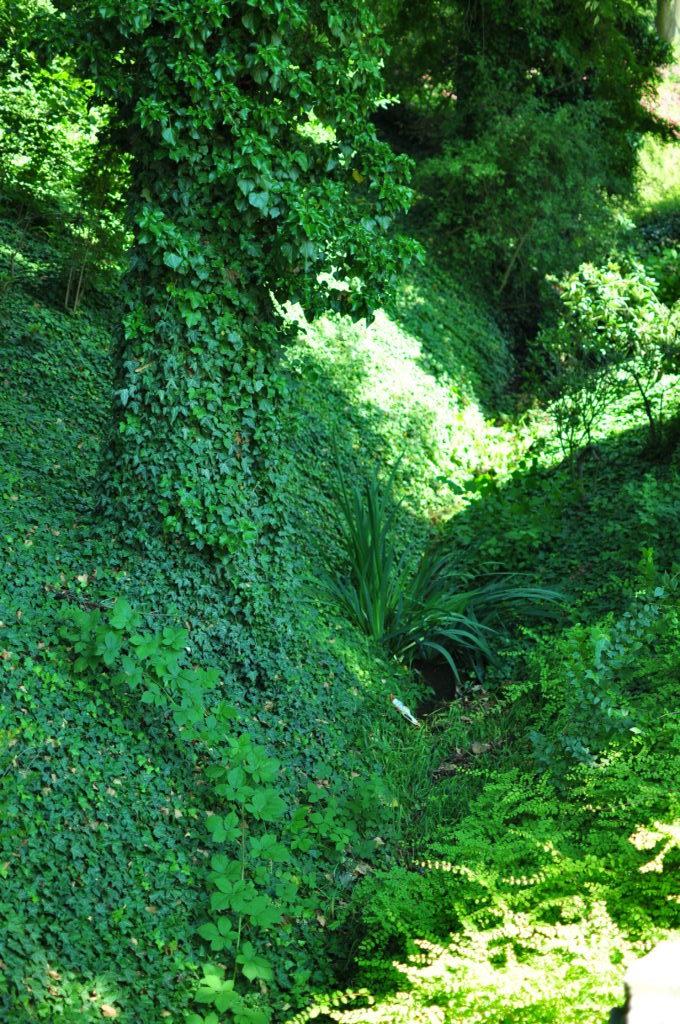 Bluszcz przed arboretum