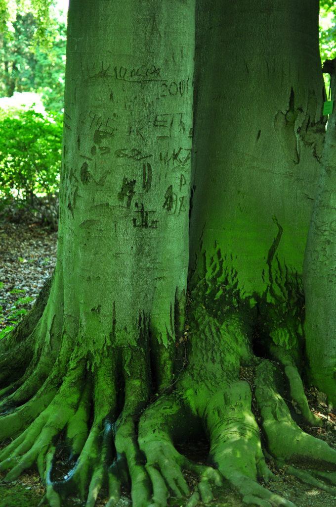 Drzewo z datami i napisami