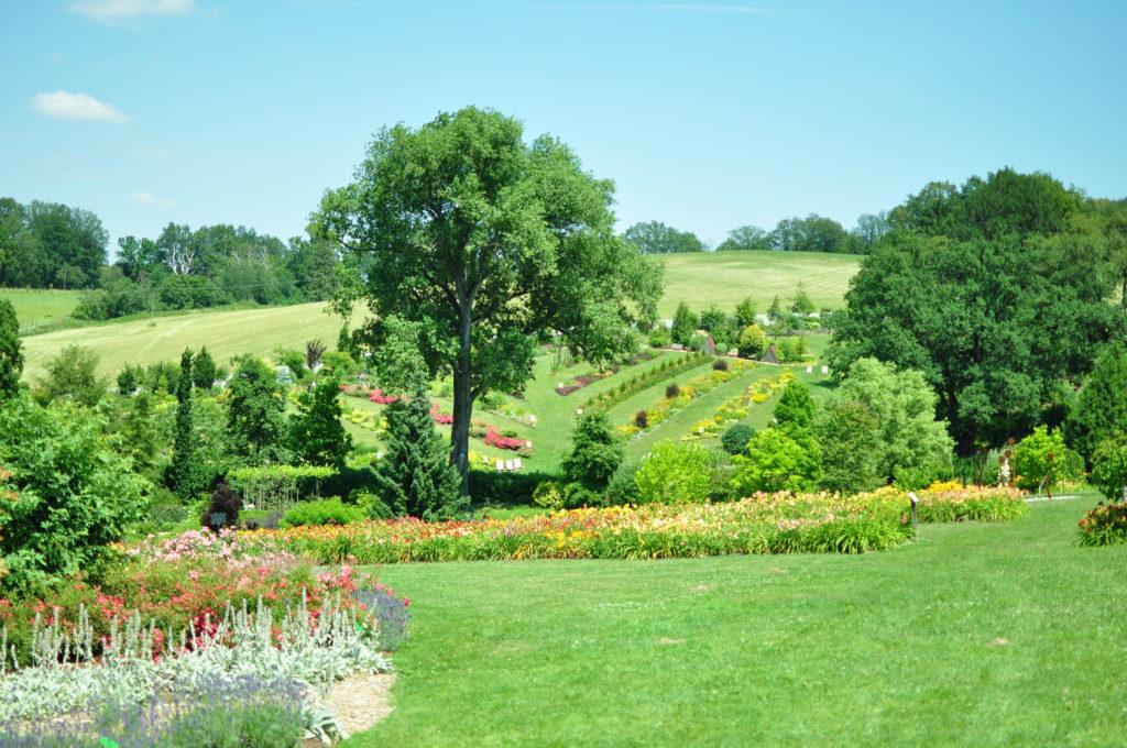 Panorama Arboretum Wojsławice.