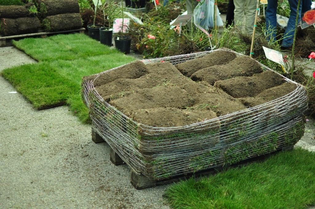"""Targi ogrodnicze """"Jesień w ogrodzie"""" w Renku. Można kupić nawet trawę :)"""