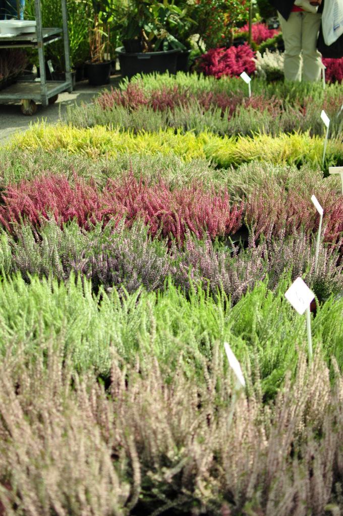 Jesienne targi ogrodnicze w Renku