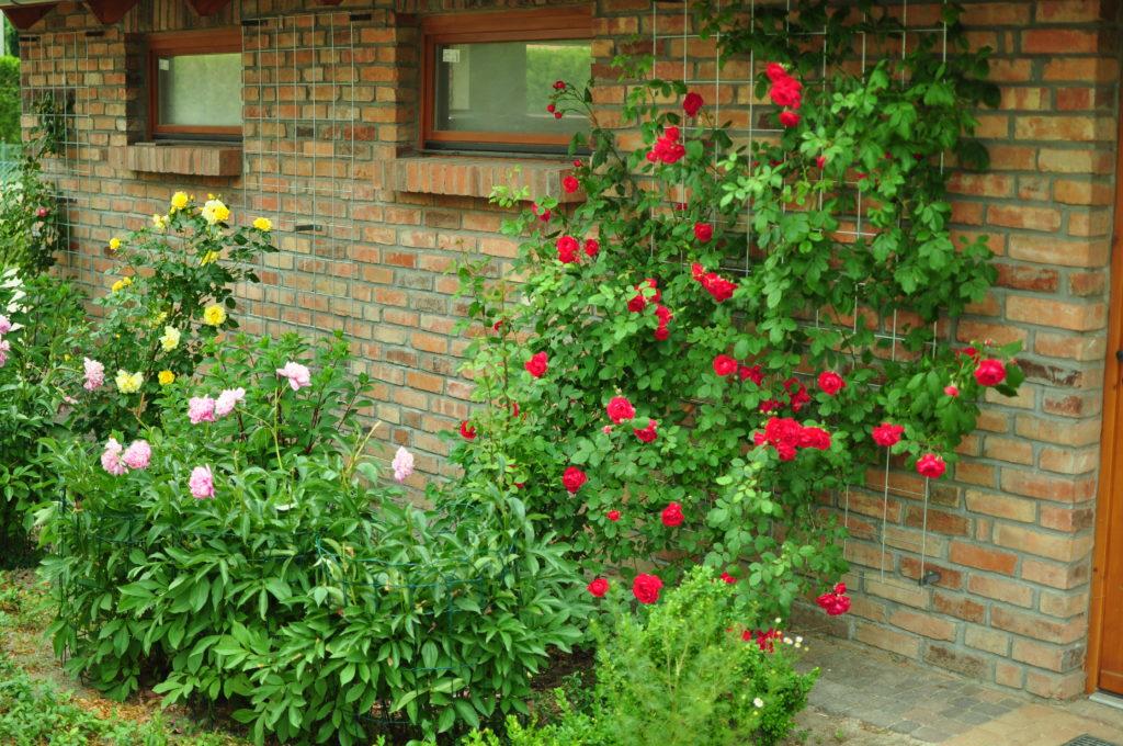Róże przy podporach