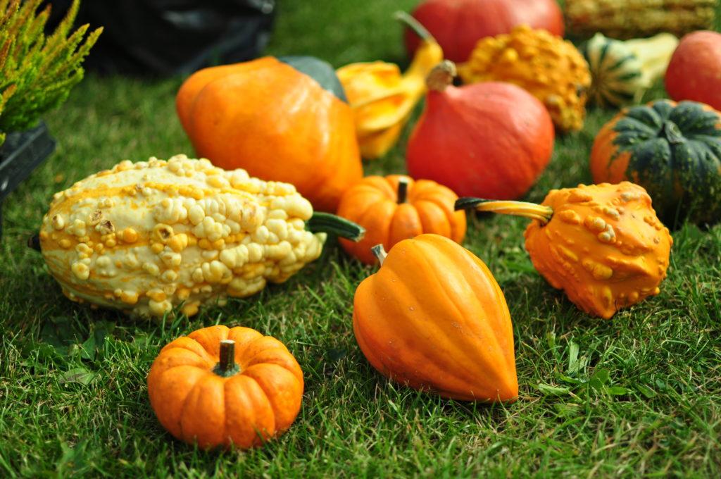 Targi Jesień w Ogrodzie
