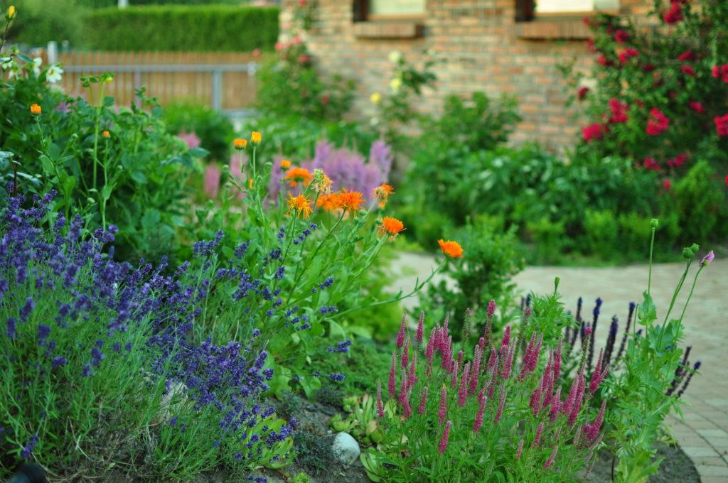 Rośliny na skarpie przy domu