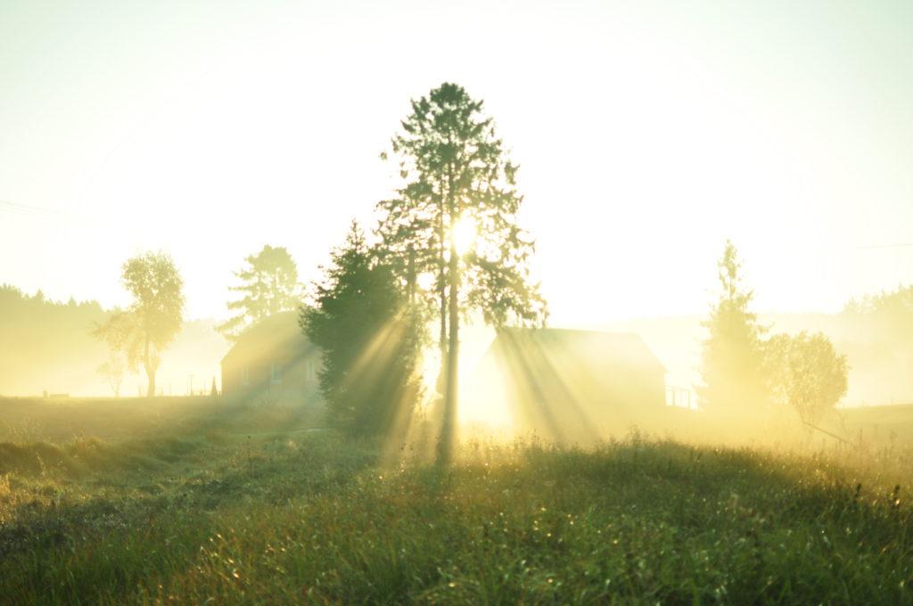 Mgła i słońce.