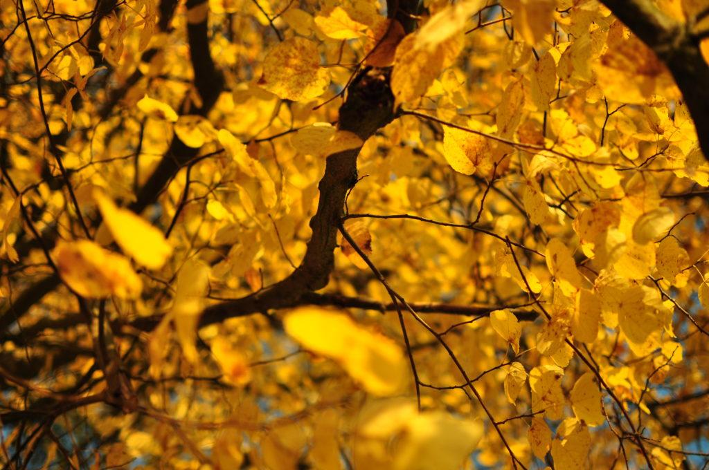 Liście i gałęzie.