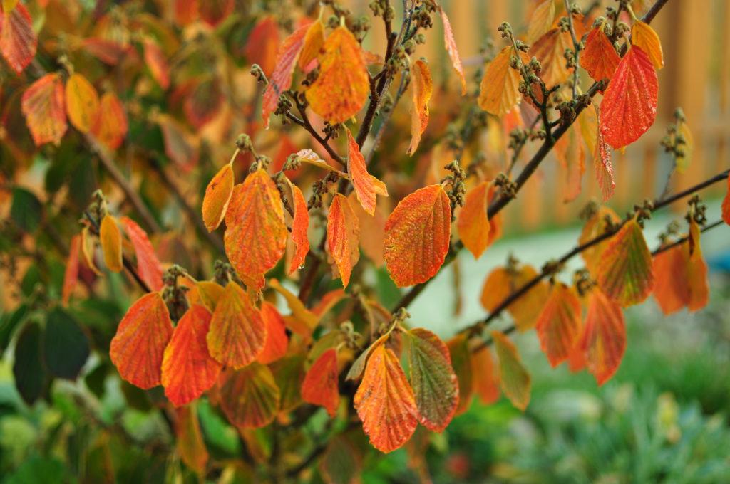 Oczar jesienią