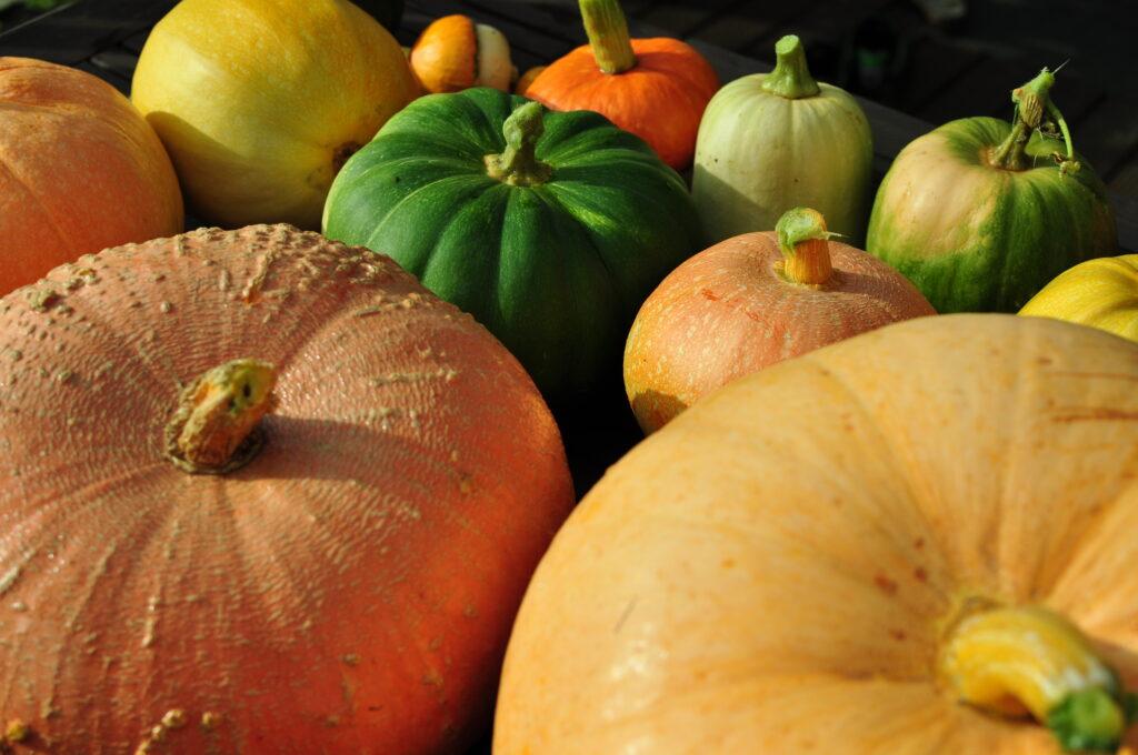Dynie - blog ogrodniczy